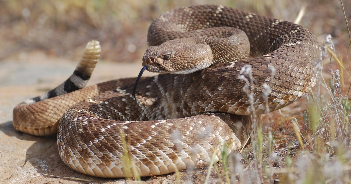 How to Avoid (and Treat) Snakebites While Out on a Hike