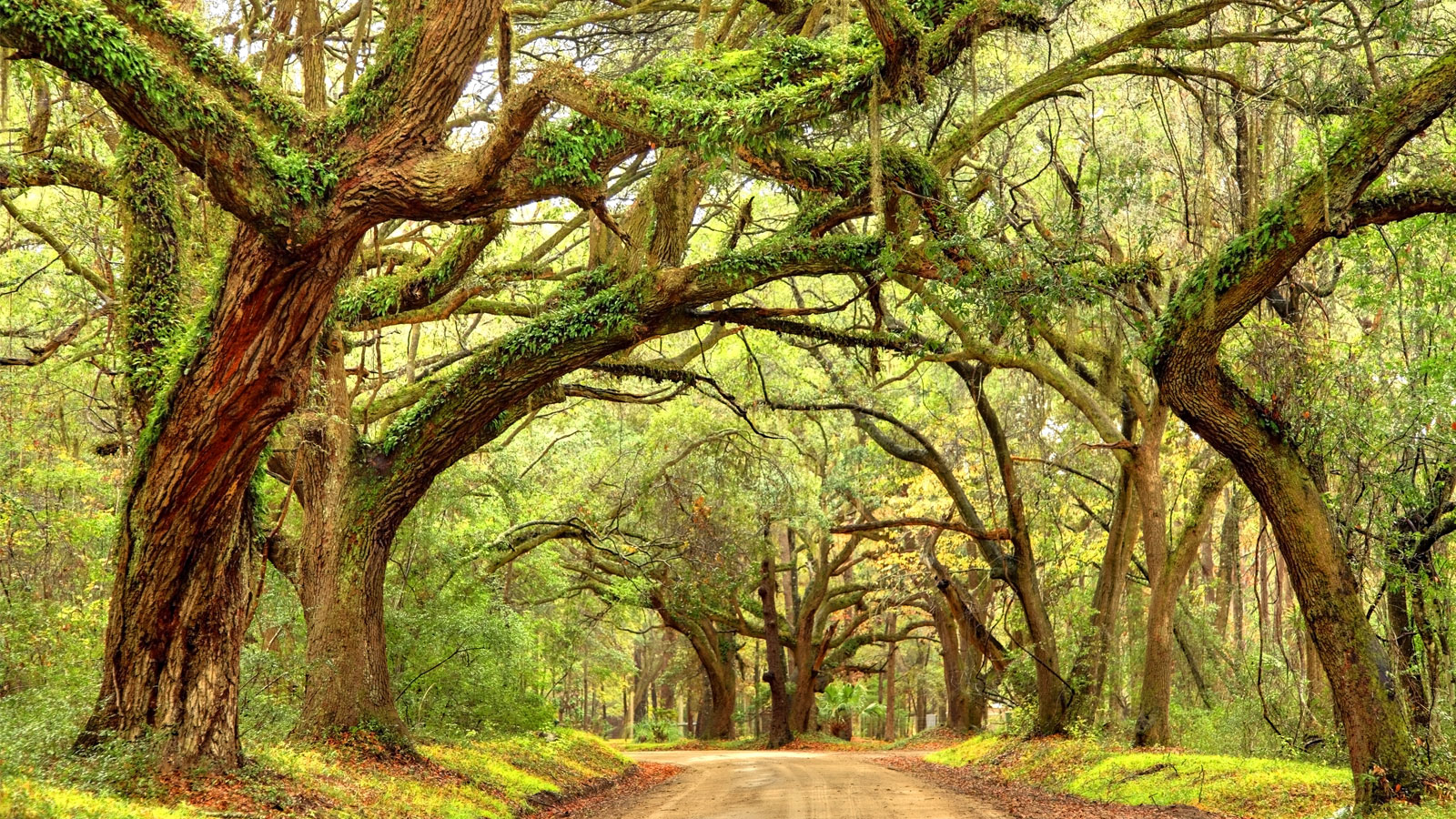 Fly-fishing, Parish Ruins, and Vintage Bikes: The 4-Day Weekend in South Carolina's Lowcountry