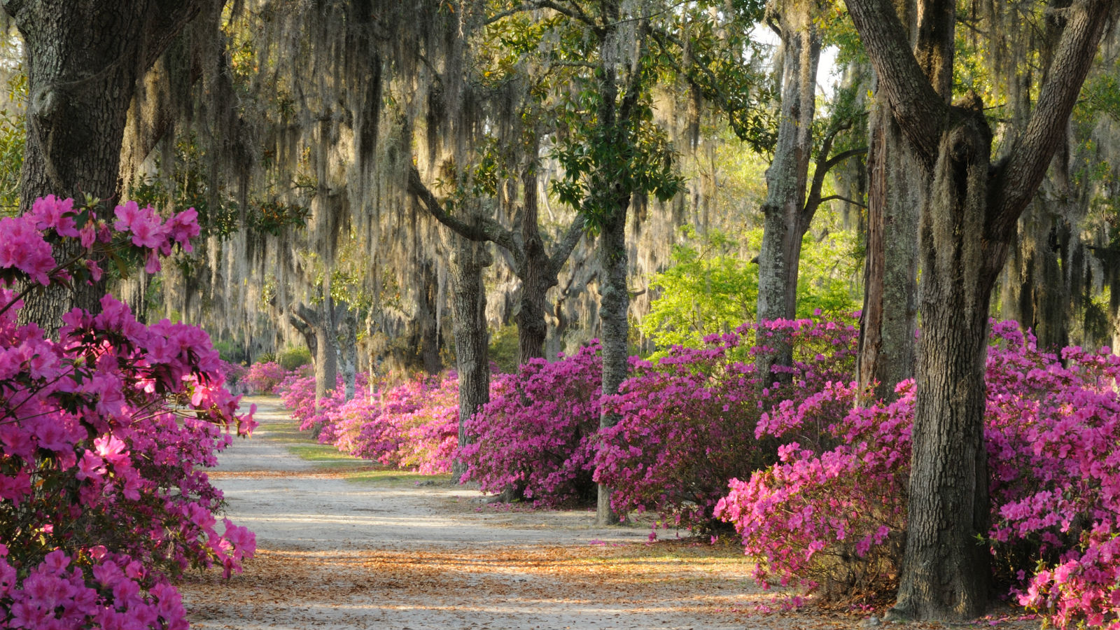 Soul Food, Ghost Tours, and Golf: The Ultimate 4-day Weekend in Savannah, Georgia