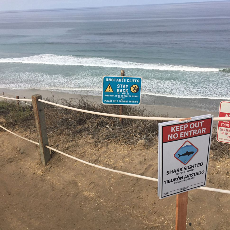 What Is the 'White Shark Cafe' and What Does It Mean for Swimmers and Surfers?