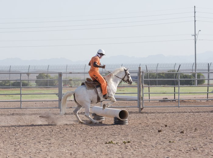 A saddle-trained mustang makes a jump.