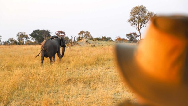 Tourist looking at elephant in Hwange National Park, Zimbabwe