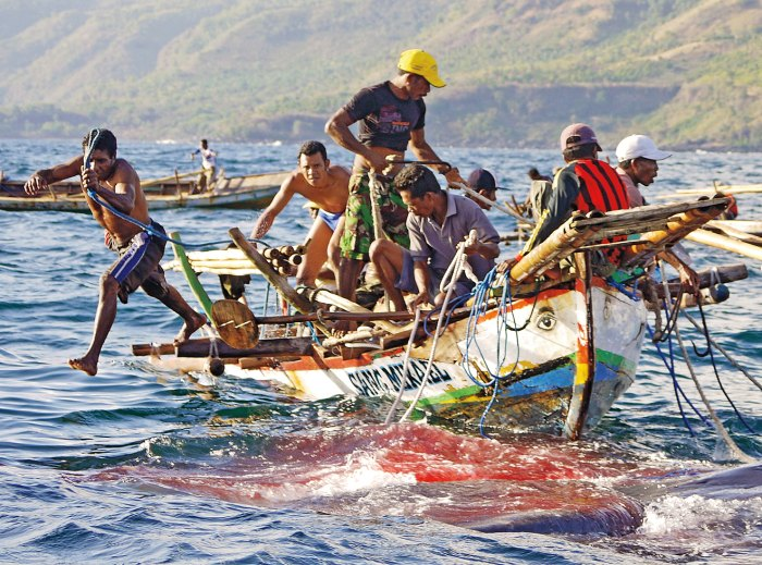 Following an hours-long battle, Lamaleran hunters prepare to lash a defeated whale to their boat.