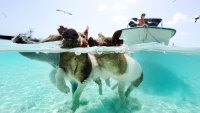 Swimming Pigs, Shark Diving, and Daiquiris on Repeat: The 4-day Weekend in the Bahamas