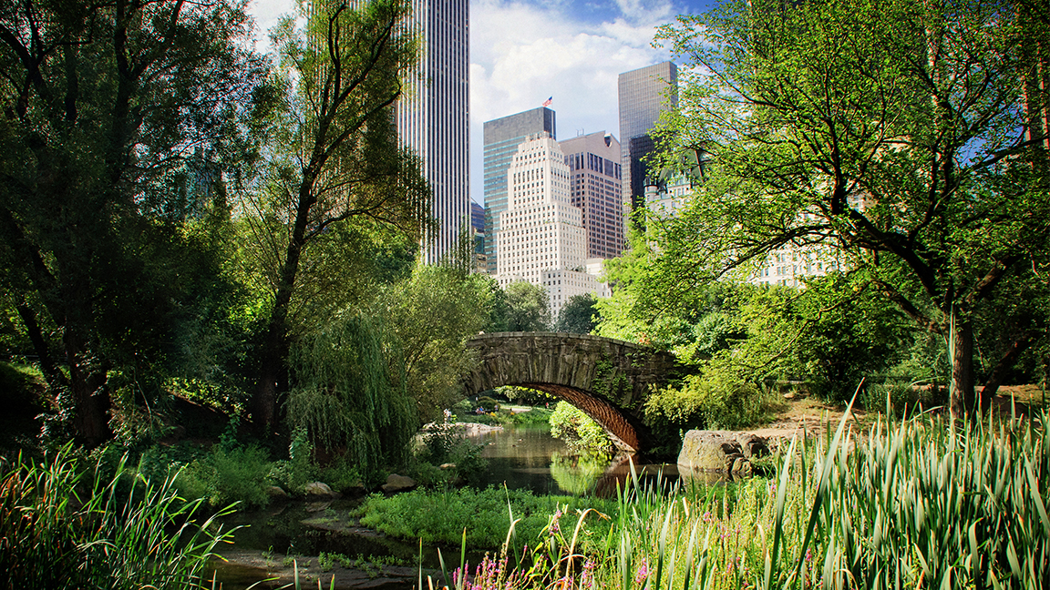 Lowered Stress and Better Blood Vessels: How Green Space Helps Your Heart