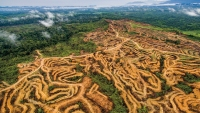Palm oil is among the world's hottest commodities. It's also devastating rain forests.