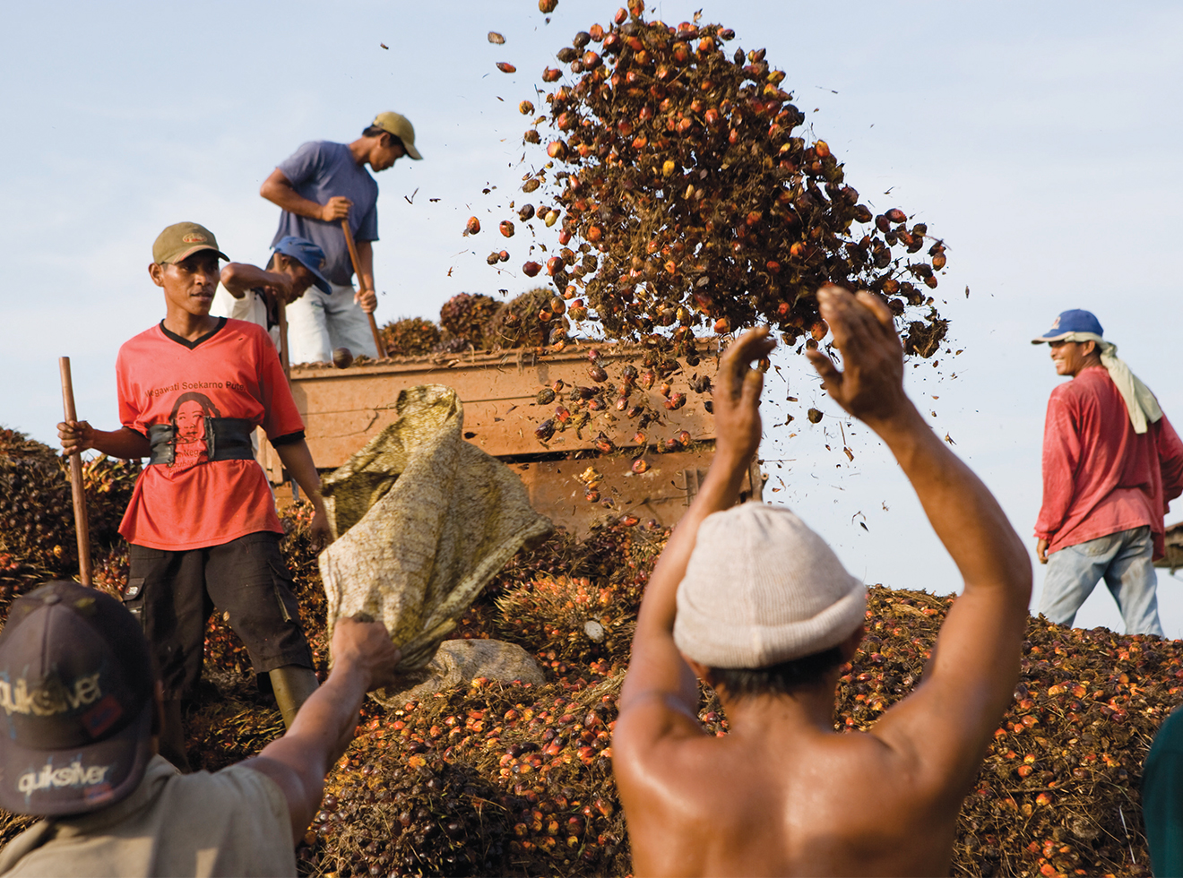 Workers unload oil-palm bunches in preparation for processing.
