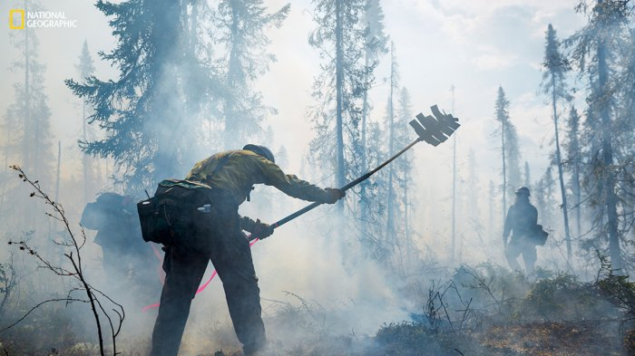 Smokejumpers use beaters-strips of hard rubber on flexible shafts-to pound burning moss and tussock grass into the moss below, damp from melted permafrost. Such swampy coniferous forest, or taiga, is typical of high northern latitudes. (Photograph by Mark Thiessen / National Geographic)