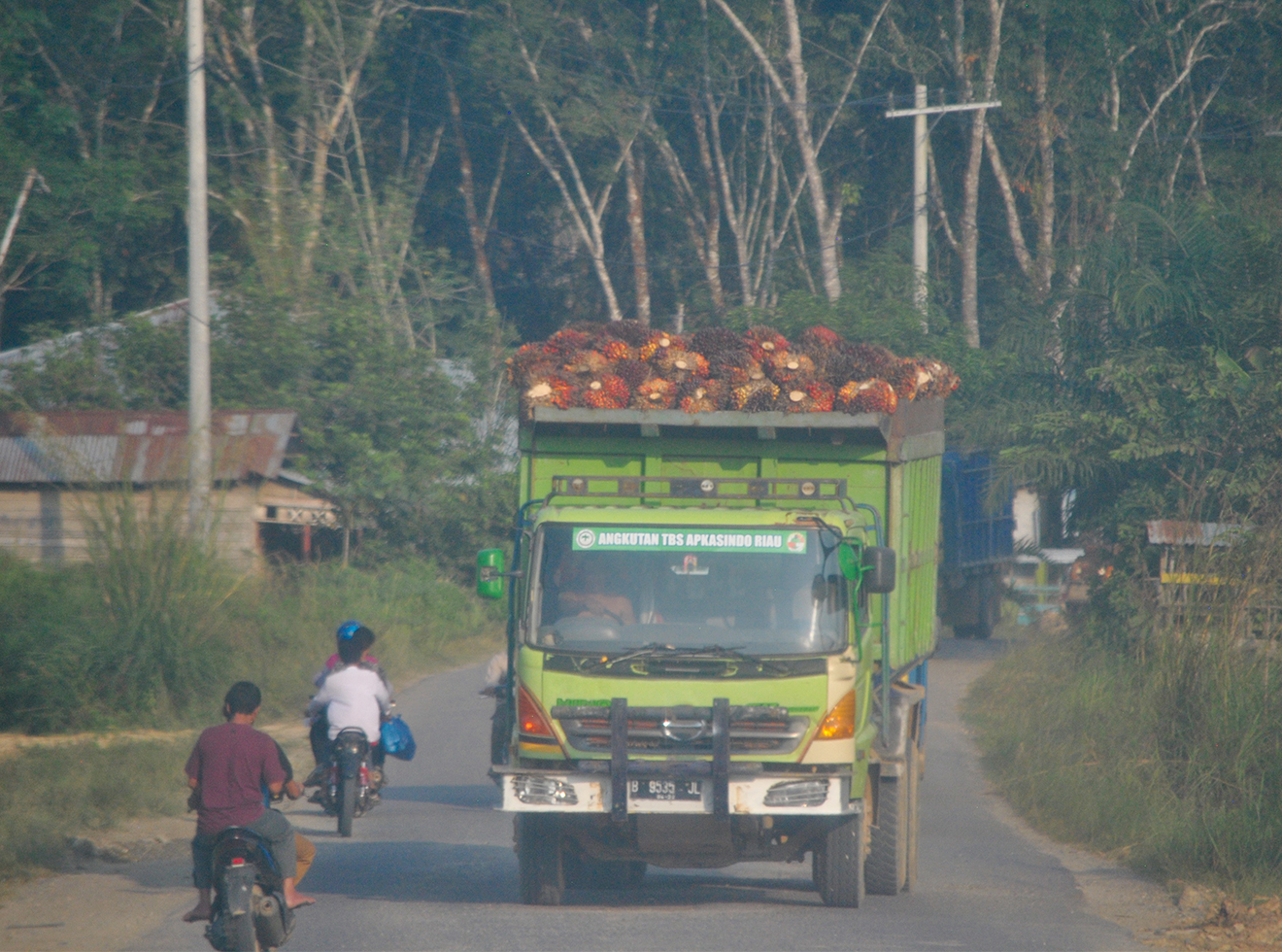 Trucks transport the fruit for processing.
