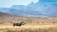 You Can Help Save Black Rhinos by Staying at This Luxury Camp in Namibia