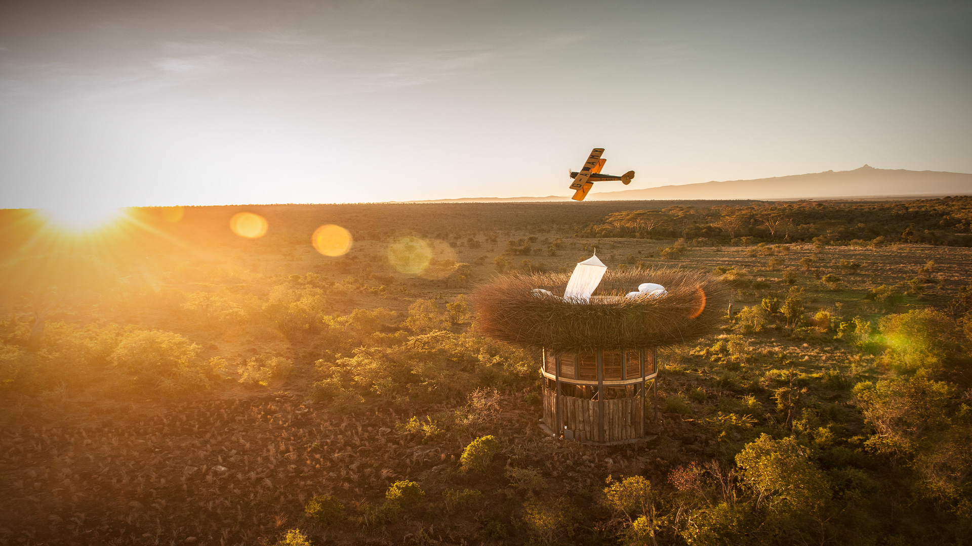 The Best Treehouses to Sleep Under the Stars and Above Spectacular Wildlife in Africa