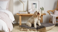 dog-bed-canvas-small-000-3_1440x