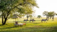 Sabora Tented Camp, Serengeti