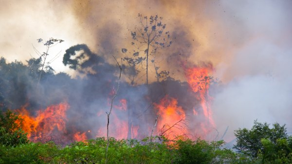 Brazilian Amazon burns to be cleared for pasture space