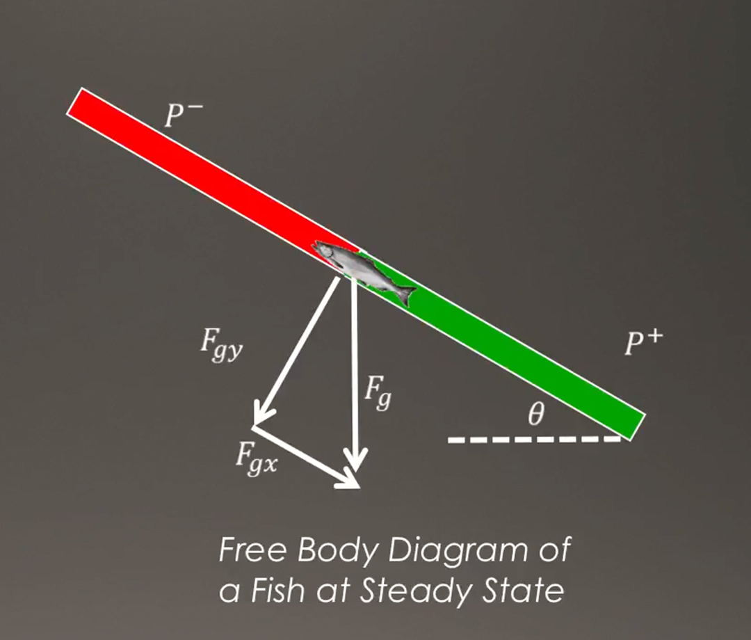 A diagram of the pressure differential within the salmon cannons