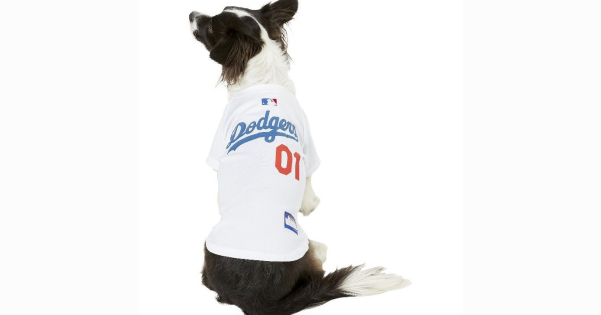 uk availability baef6 d6ec6 Share Your Team Pride with Your Favorite Furry Fan at Chewy