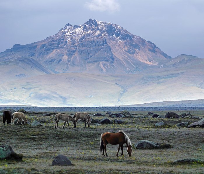 Wild horses on a plain below the Cotopaxi volcano in Cotopaxi National Park, Ecuador