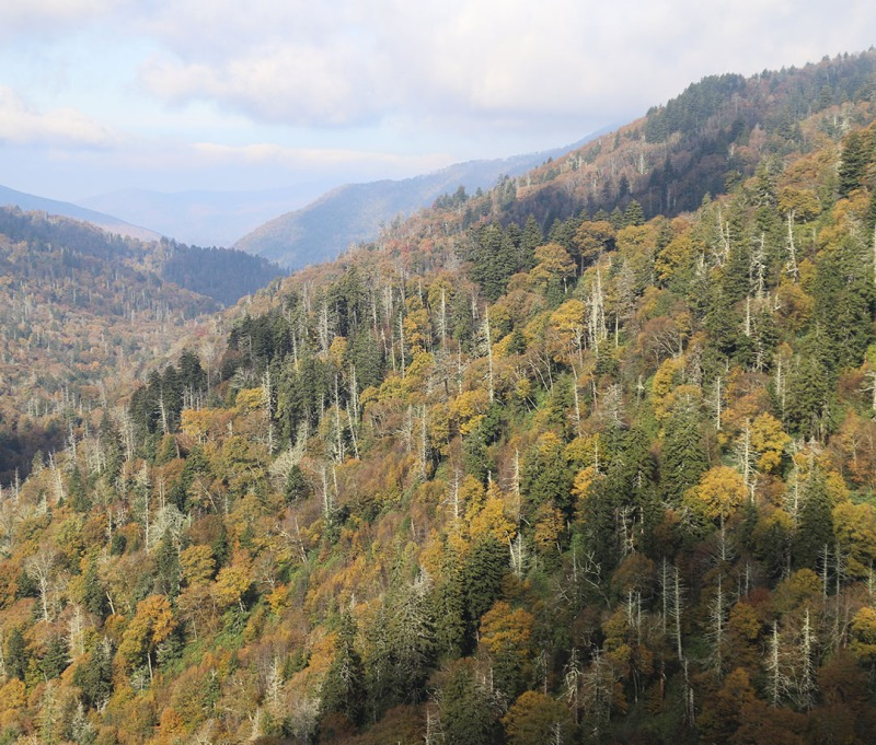 Fall in the valleys of Great Smoky Mountains National Park in Tennessee