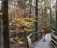 Congaree National Park, SC