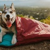 dog gifts; dog gift guide