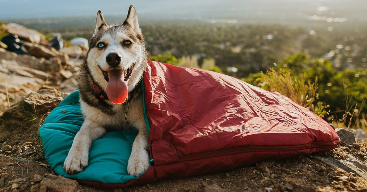 The Best Gift Ideas for Dog Owners