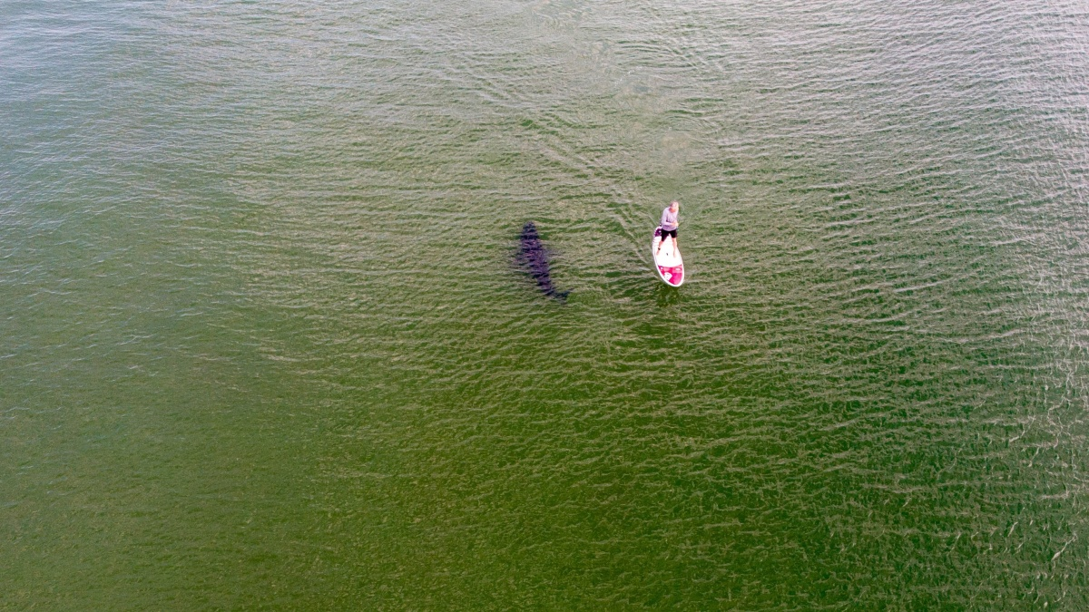 How a Shark Epidemic is Changing Surfing and Community on Cape Cod