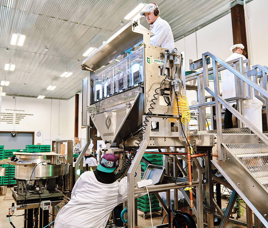 Workers with a machine that precisely weighs the cannabis.