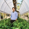 Michael Steinmetz; weed growing; marijuana growing; marijuana farms; king of weed; pot company; Flow Kana