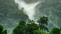 Fog over rainforest