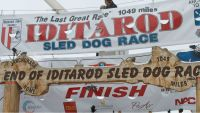 Mandatory Credit: Photo by Mark Thiessen/AP/Shutterstock (6100630b) Volunteers help raise the Iditarod finishers banner at the burled arch finish line, in Nome, Alaska. The winner of the thousand-mile Iditarod Trail Sled Dog Race across Alaska is expected this week, possibly early Wednesday morning Iditarod, Nome, USA