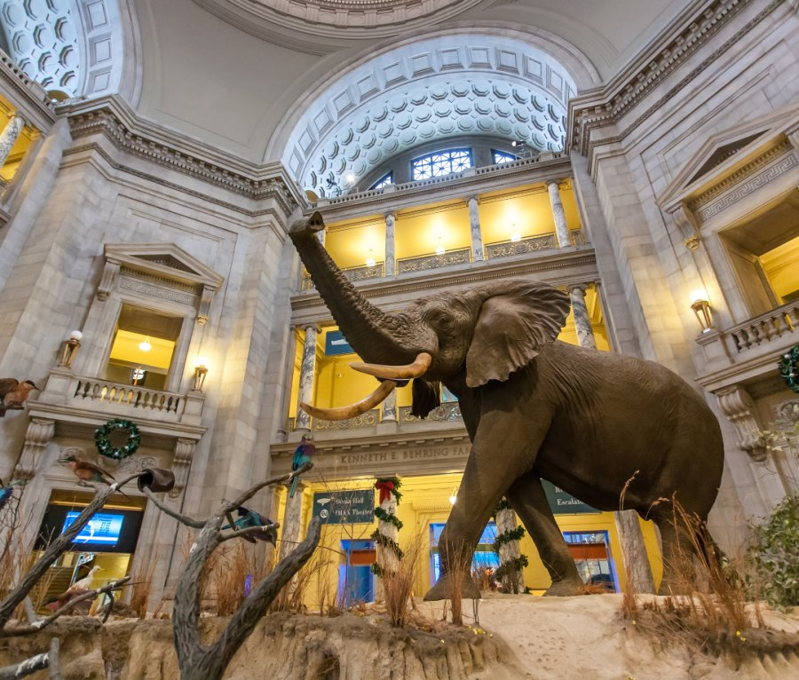 The Smithsonian National Museum of Natural History in Washington, D.C., USA