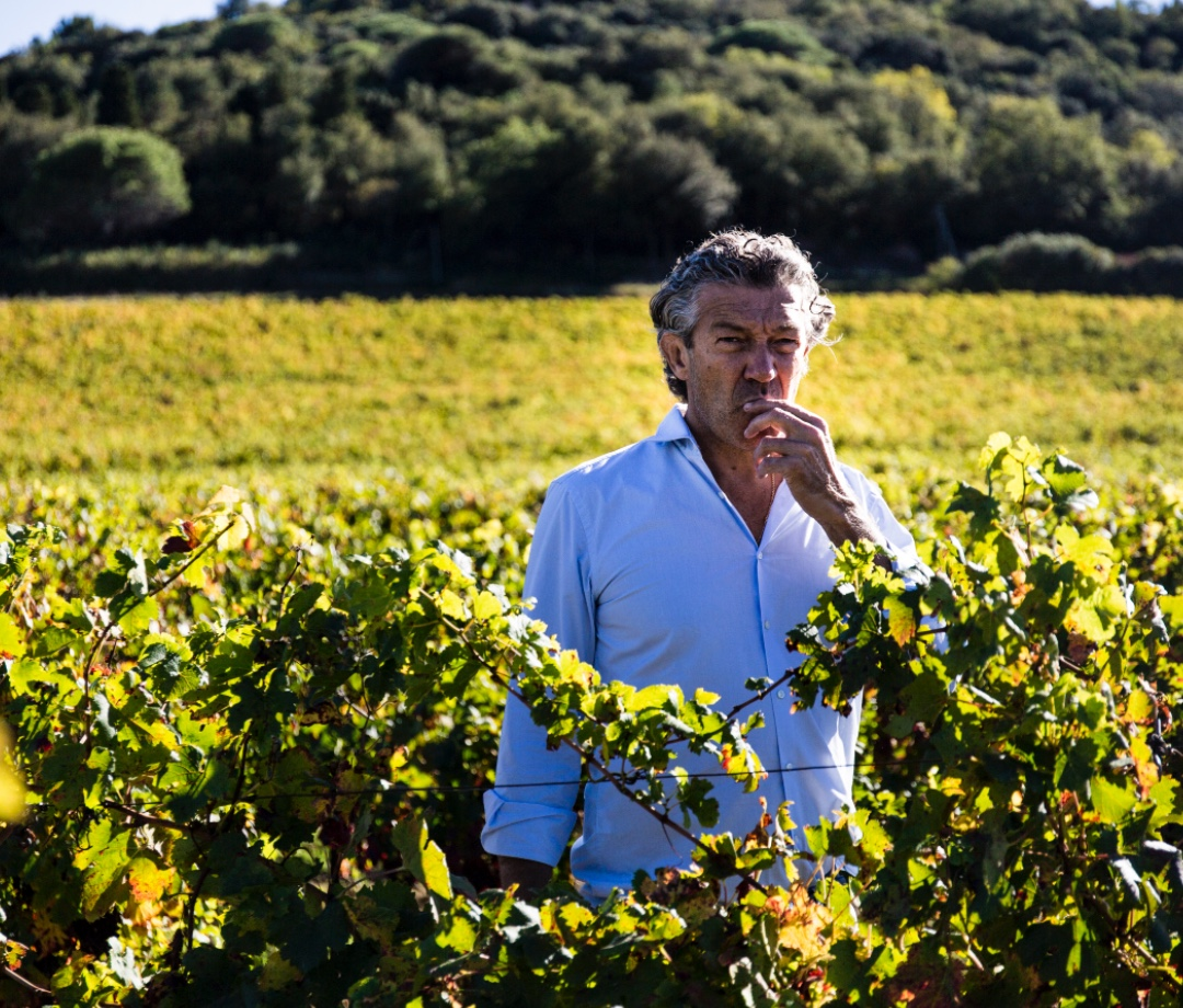 Gérard Bertrand in vineyard