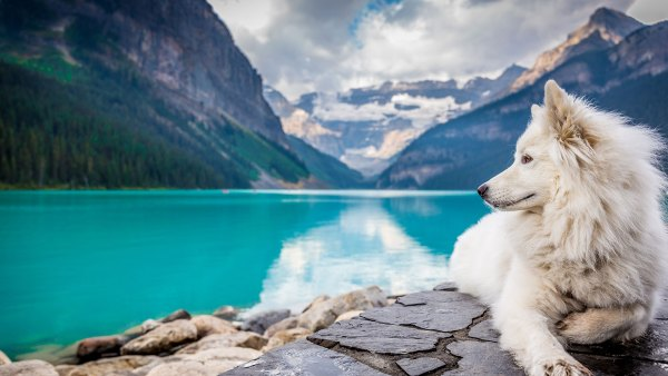 Dog sitting on rocks in front of lake