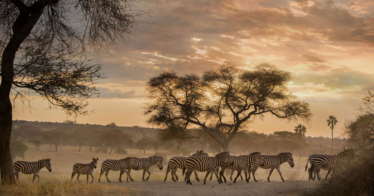 This Walking Safari Brings You Closer to Africa's Wilderness
