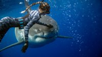 Swimming with Sharks Ocean Ramsey Hawaii great white sharks