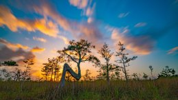 Cypress tree at sunset in Everglades National Park