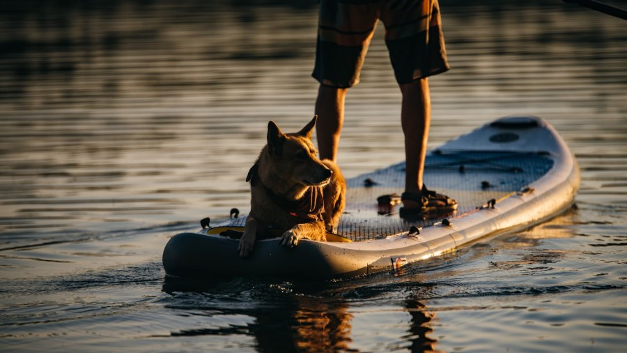 standup paddleboarding SUP with dog