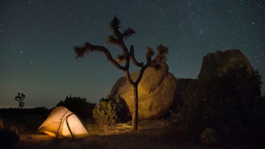 Stars at night in Joshua Tree