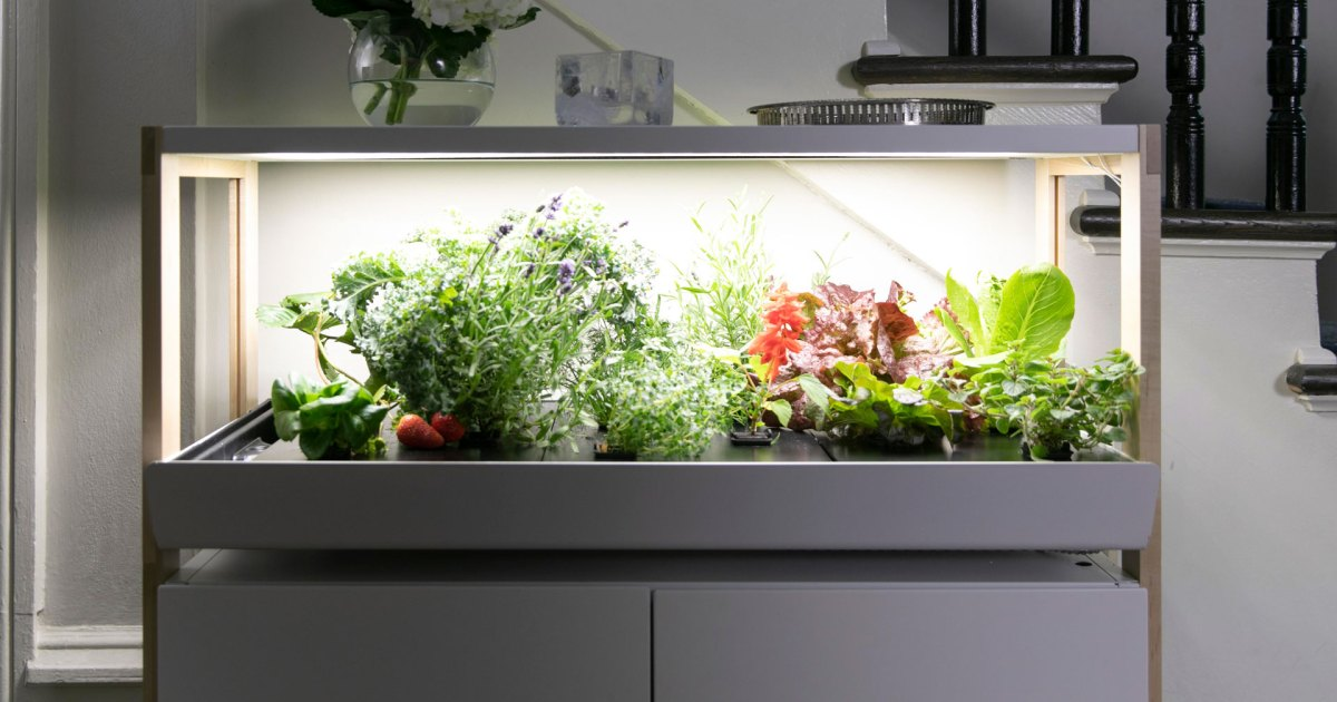 Photo of This Indoor Garden System Is the Perfect Solution for Any Food Grower