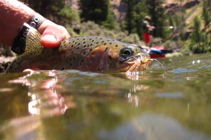 salmon fishing from a raft on Idaho's Middle Fork Salmon