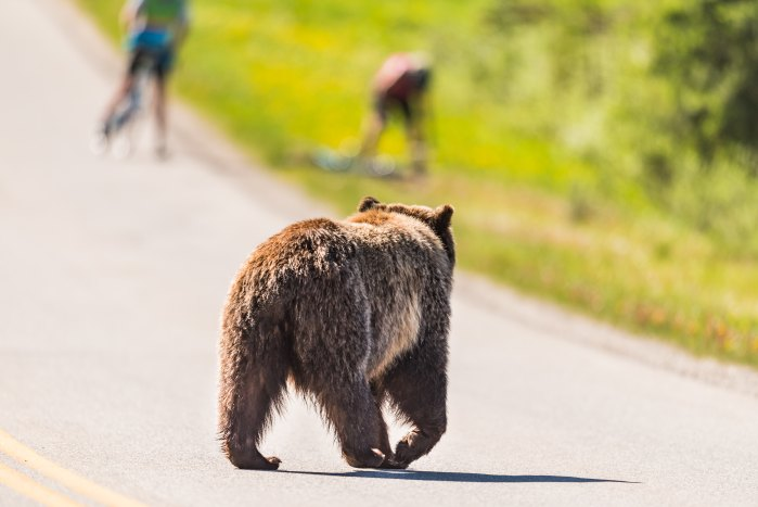 Bear encounters are rare, but they do happen.
