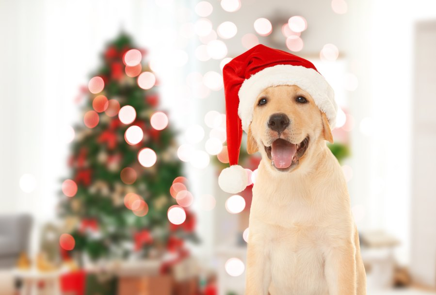 Pick Up Some Holiday Dog Treats For Your Furball At Chewy