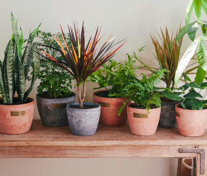 Lively Root Air-Purifying Plants