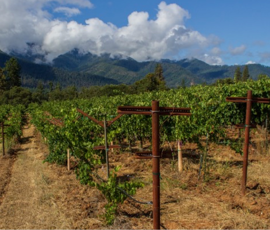 Day Wines is a vineyard in Oregon