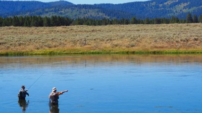 School of Trout fly-fishing