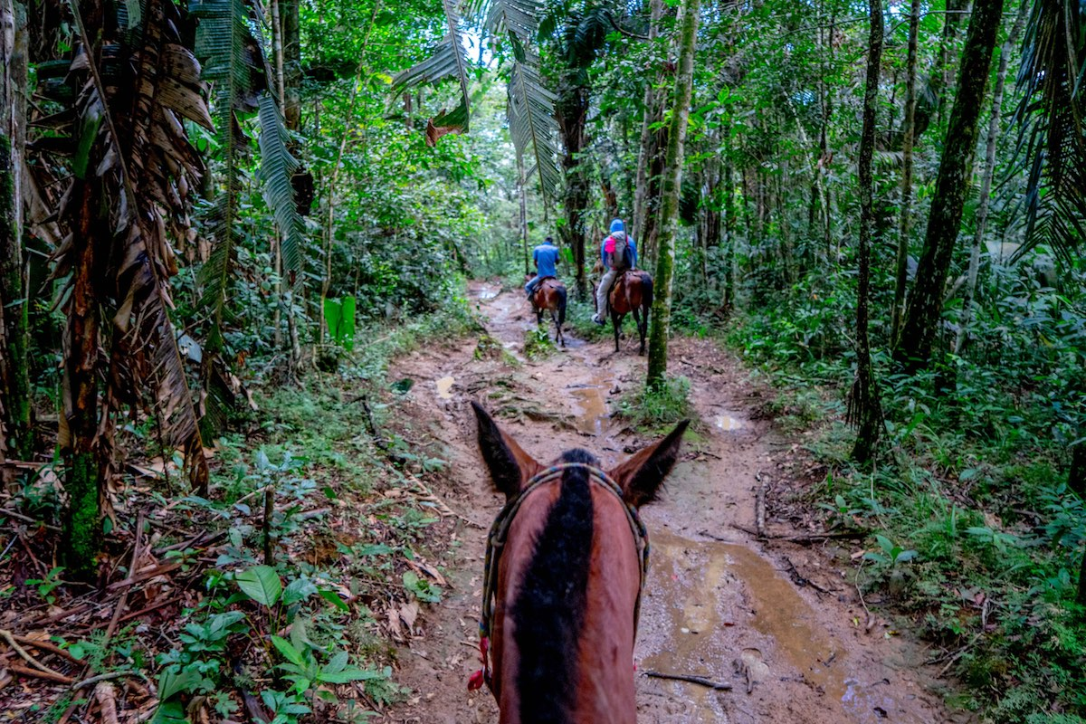 Colombia horses