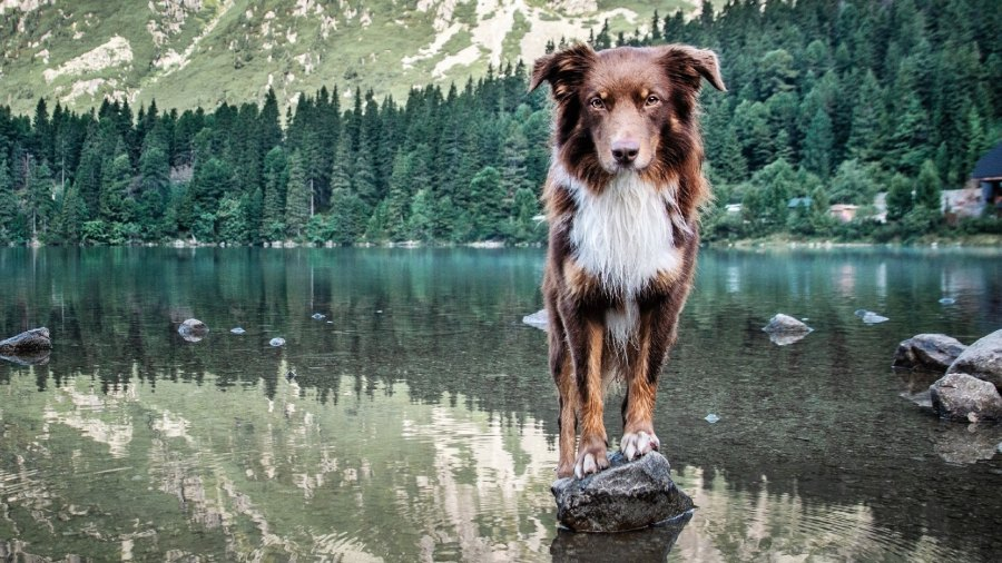 The Best Dog Gear for Summer
