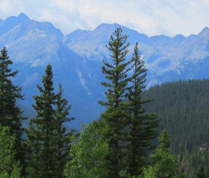 Rockies in the background of San Juan National Forest