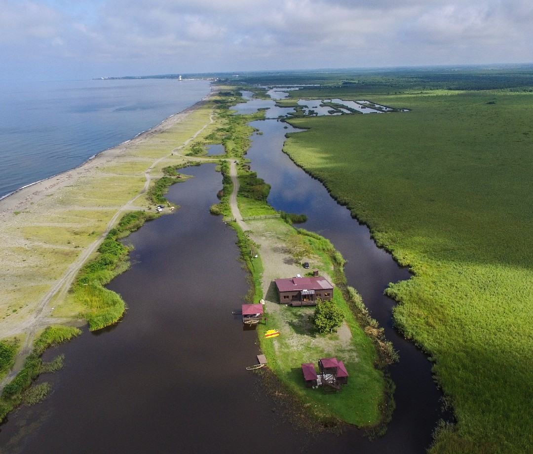 The coast of the Colchic Rainforests and Wetlands in Georgia.
