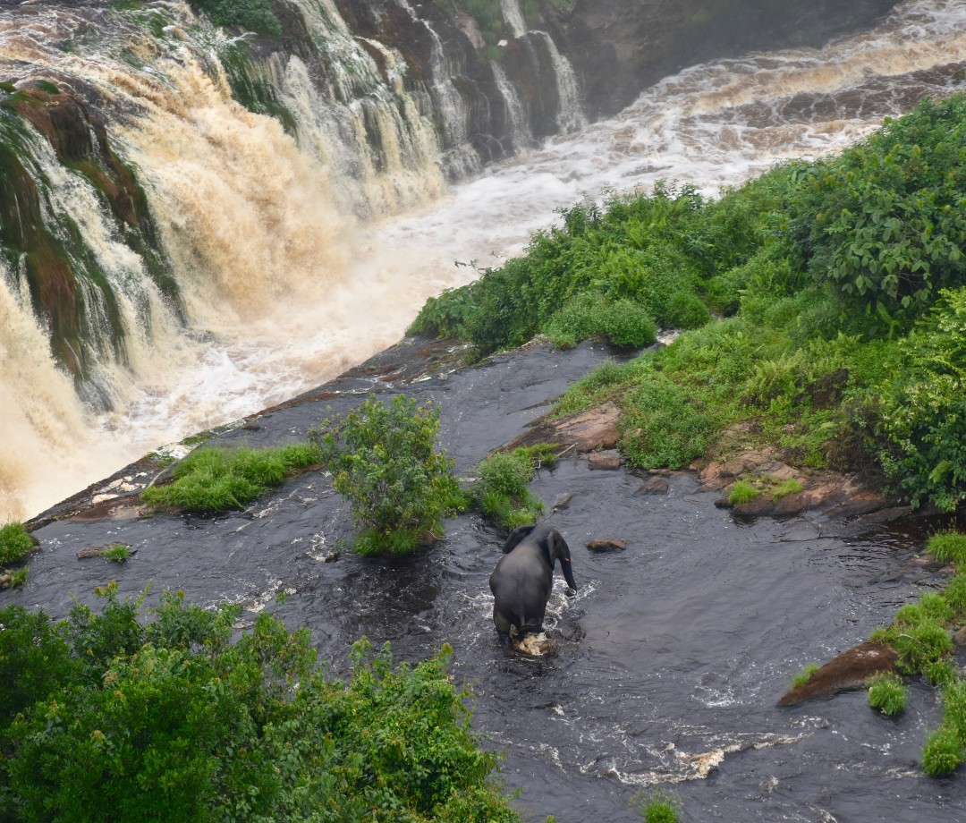 An elephant next to enormous waterfalls in Gabon's Ivindo National Park.